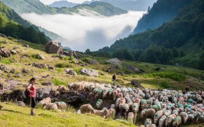 Les nouvelles bergères des Pyrénées